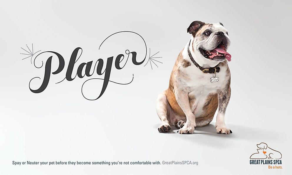 Great Plains SPCA ad campaign | Communication Arts
